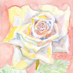 早春のバラ