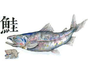 魚編シリーズ…鮭