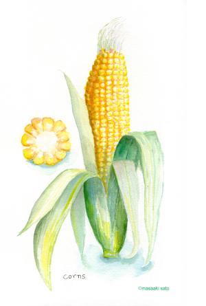 真夏の玉蜀黍