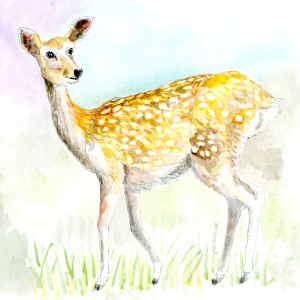 奈良への想い・・・神鹿