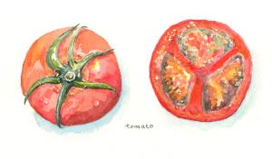 晩夏のトマト