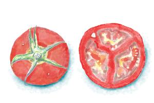 デジタル画 トマト