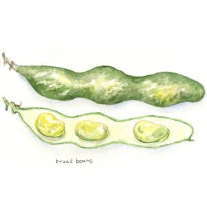 春野菜…空まめ